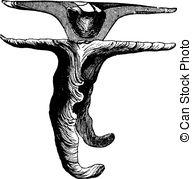 Tympanum Clip Art Vector and Illustration. 21 Tympanum clipart.