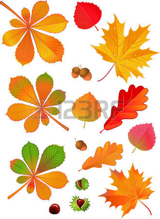 299 Horse Chestnut Cliparts, Stock Vector And Royalty Free Horse.
