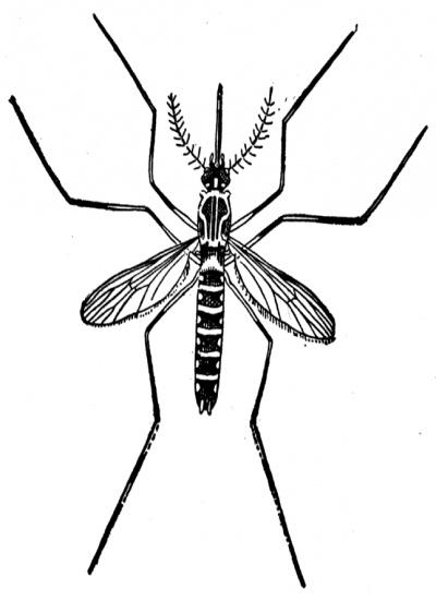 Mosquito clip art at vector clip art.