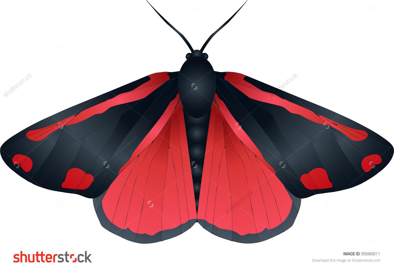 Collection Butterflies Tyria Jacobaeae Cinnabar Moth Stock Vector.