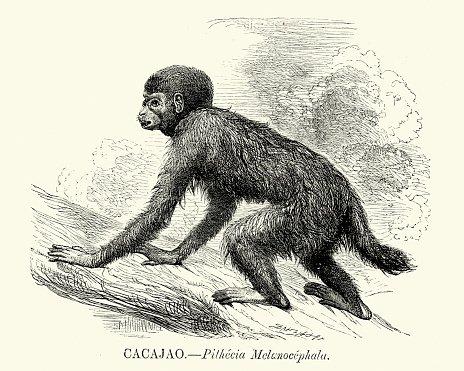 Natural history.