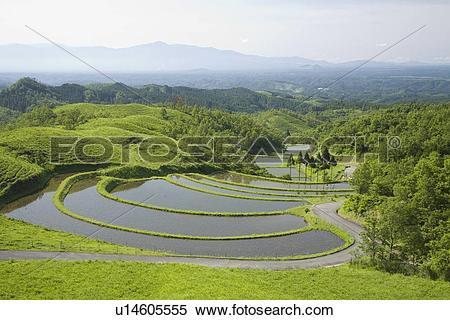 Stock Image of Ougi Terraced Rice Paddies, Ubuyama, Kumamoto.