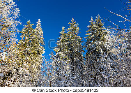 Stock Photography of Winter forest on the Uetliberg mountain.