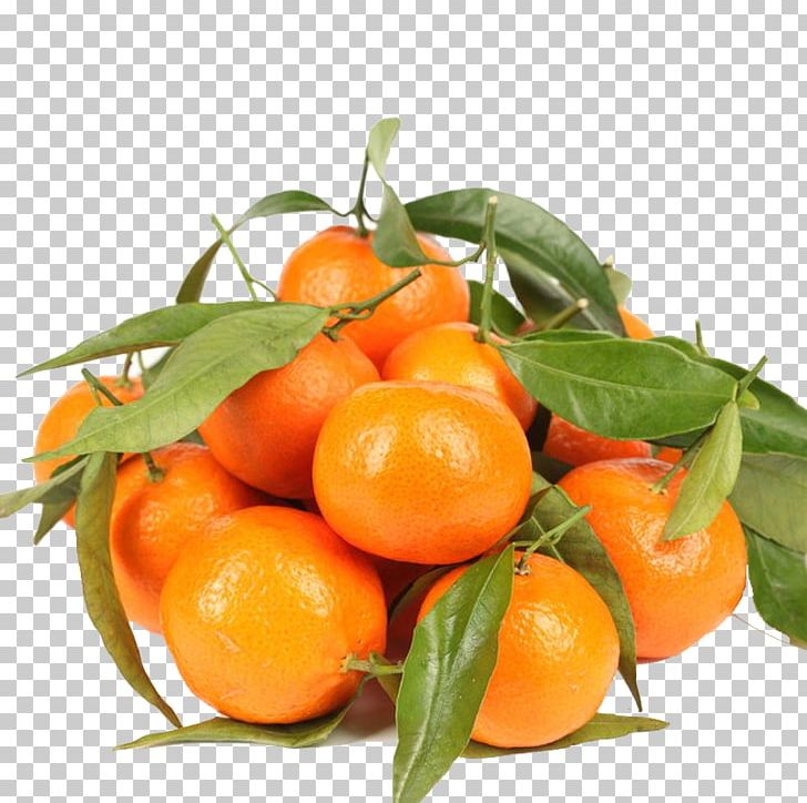Tangerine Lemon Chenpi Ugli Fruit Orange PNG, Clipart.