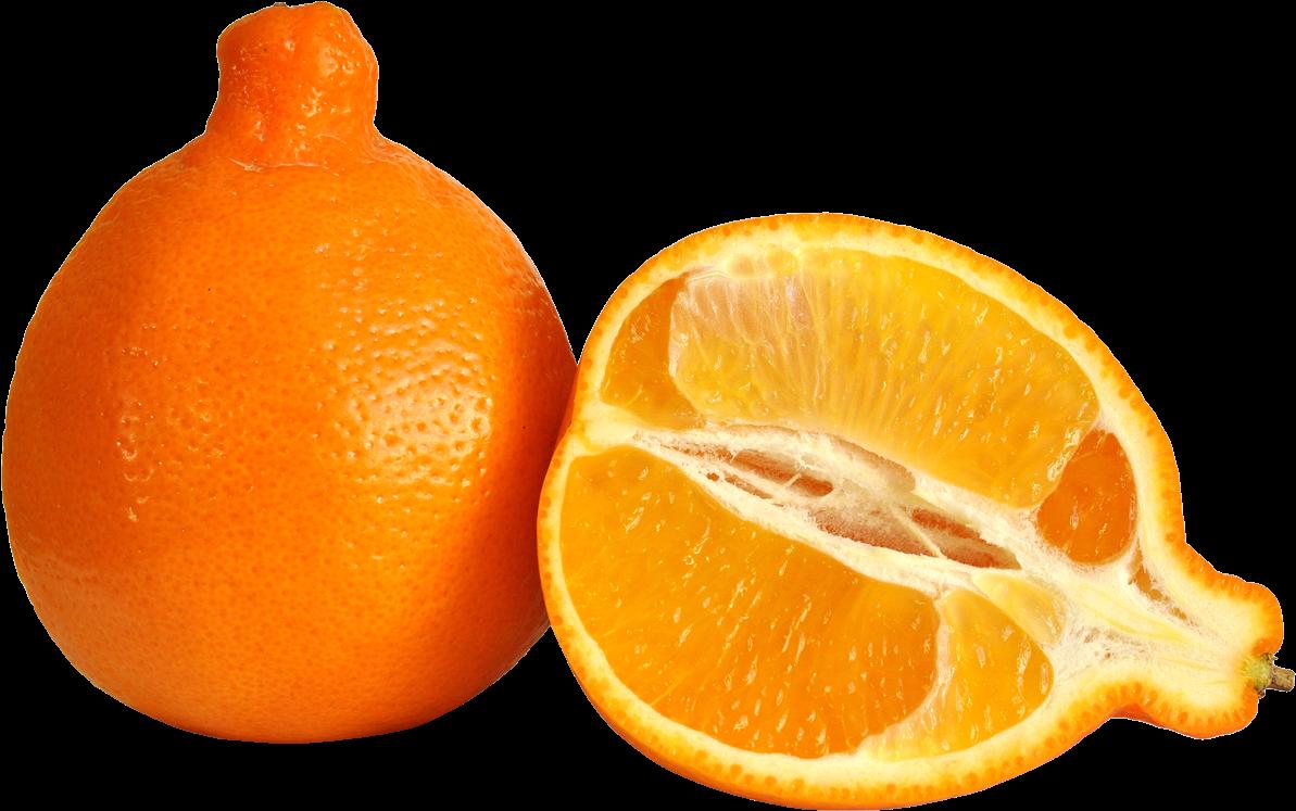 Citrus,citrus.
