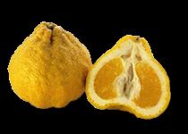 Download Free png Ugli Fruit (Citrus reticulata.