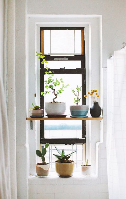 17 Best ideas about Interior Plants on Pinterest.