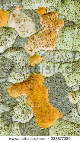 Ulmaceae Stock Photos, Royalty.