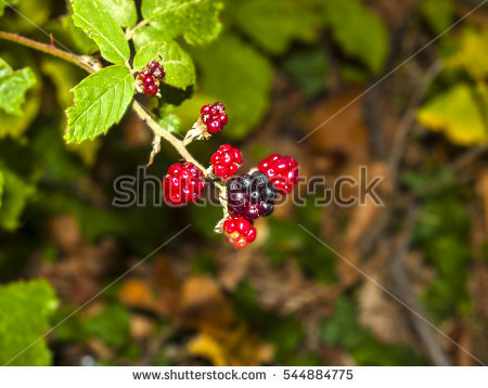 Fruit Tree Stock Photos, Royalty.