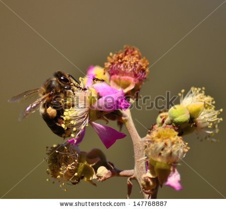 Splendid Stamens Stock Photos, Royalty.
