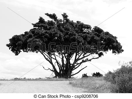 Stock Illustration of A umbrella tree.
