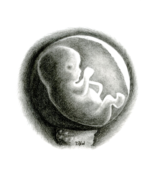 Unborn Baby Clipart.