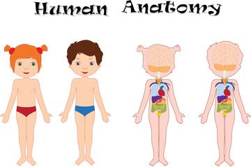 Photos, illustrations et vidéos de anatomie.