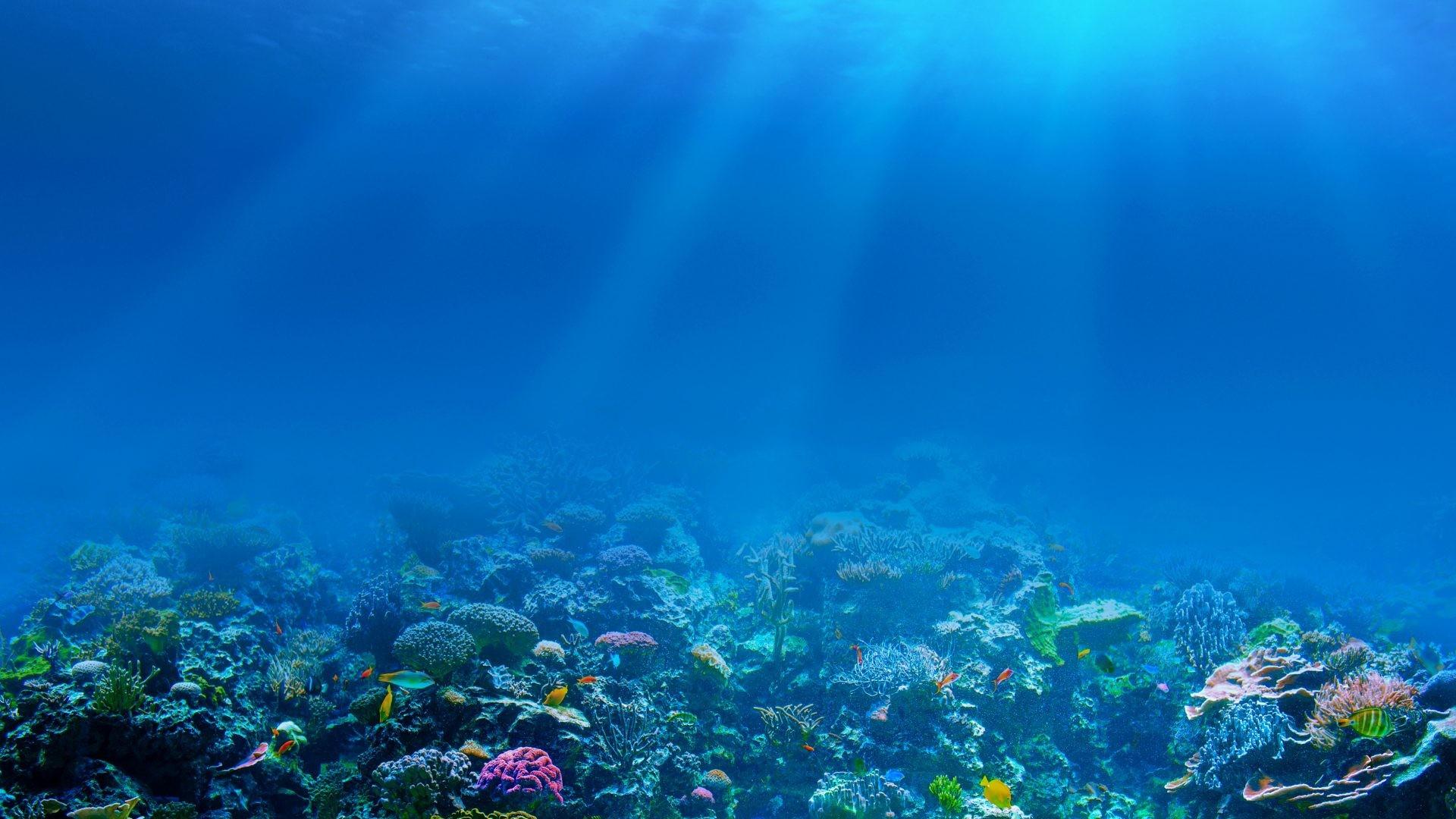 66+ Under Ocean Wallpapers on WallpaperPlay.