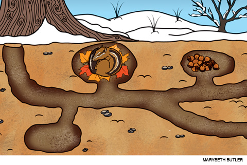 Free Cliparts Burrow Hole, Download Free Clip Art, Free Clip.