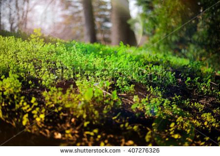 Undergrowth Stock Photos, Royalty.