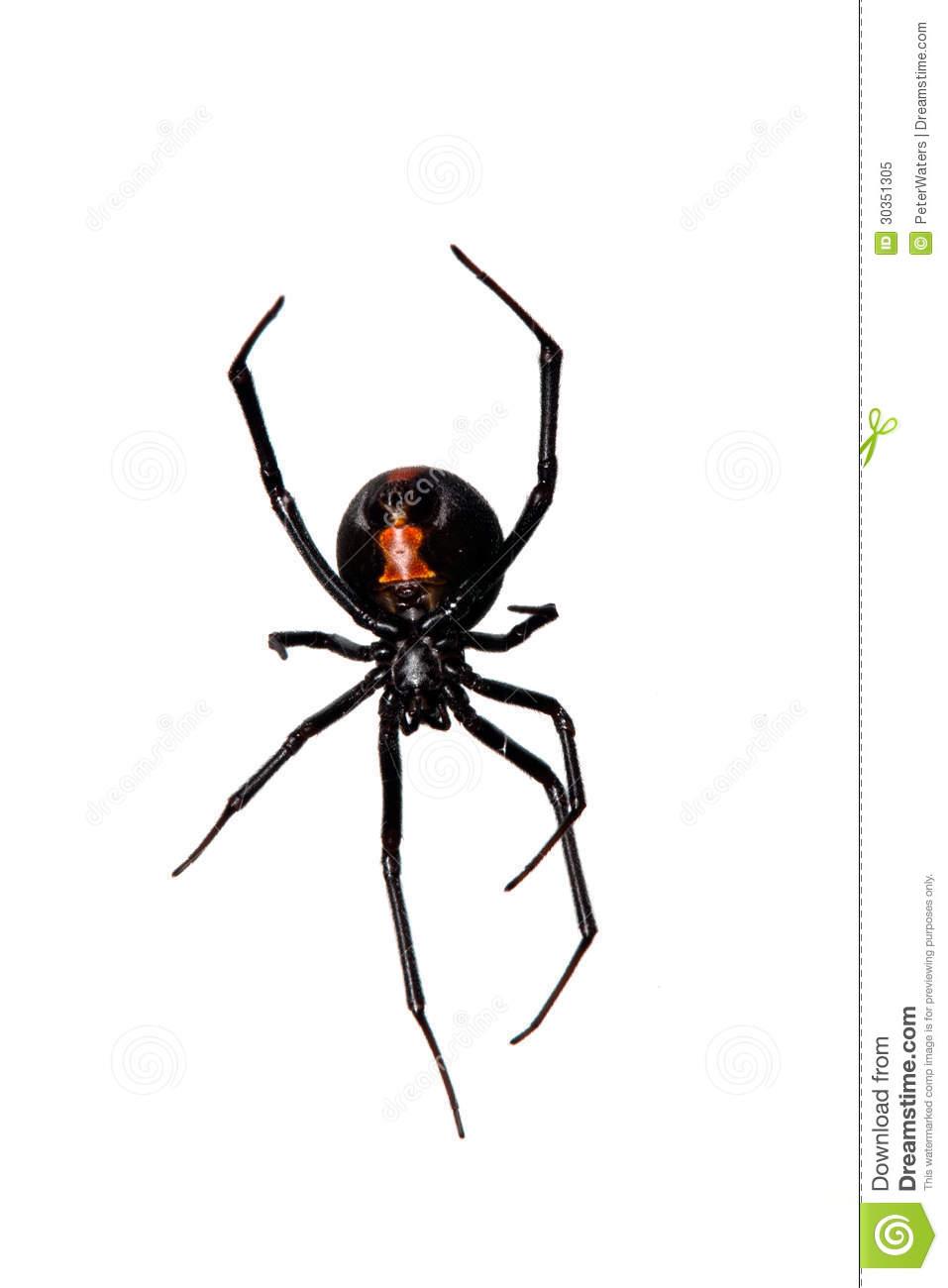 Spider, Red.