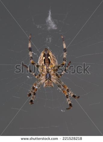 Spider Underside Stock Photos, Royalty.