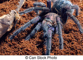 Stock Photography of Tropical Rainforest Spider.