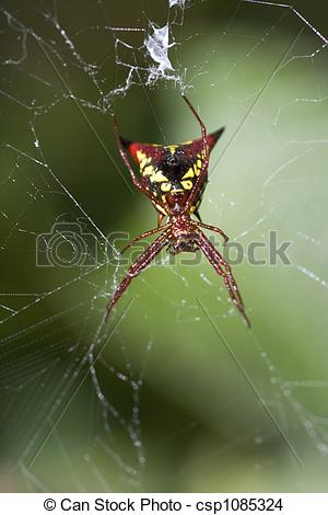 Stock Photo of black red and yellow horned spider.