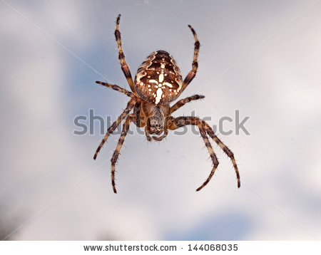 Scary Spider Stock Photos, Royalty.