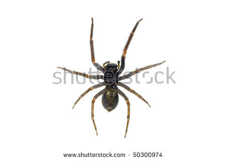House Spider Stock Photos, Royalty.