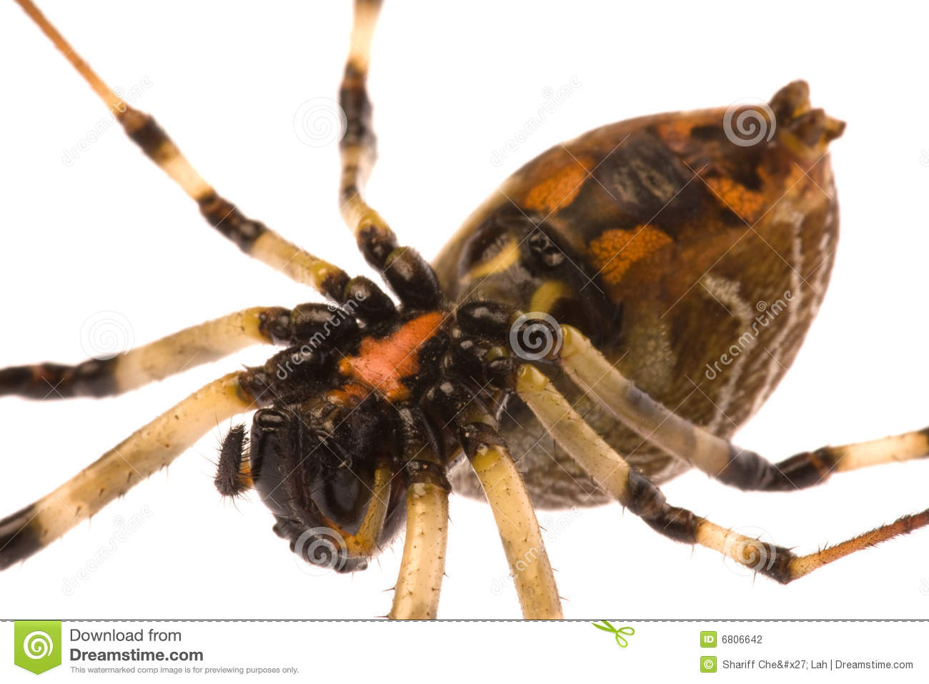 Underside Of Spider Stock Photography.