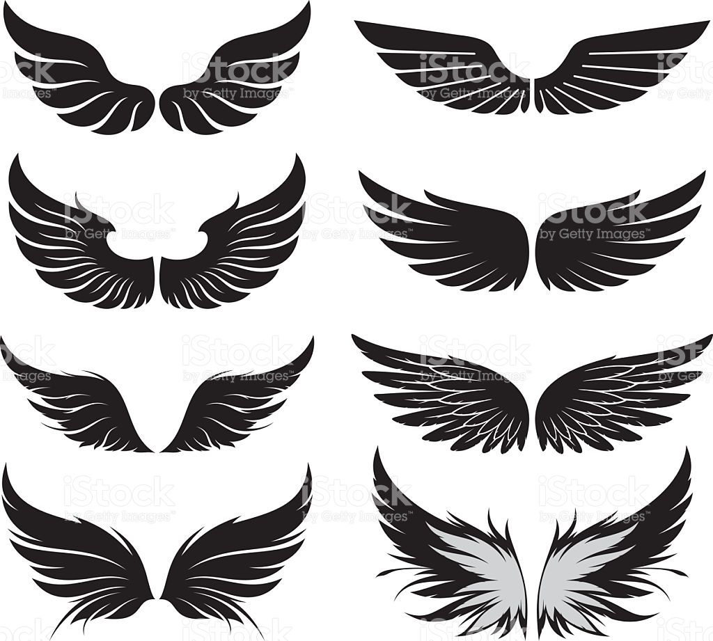 Bird Wings Pictures, Images and Stock Photos.