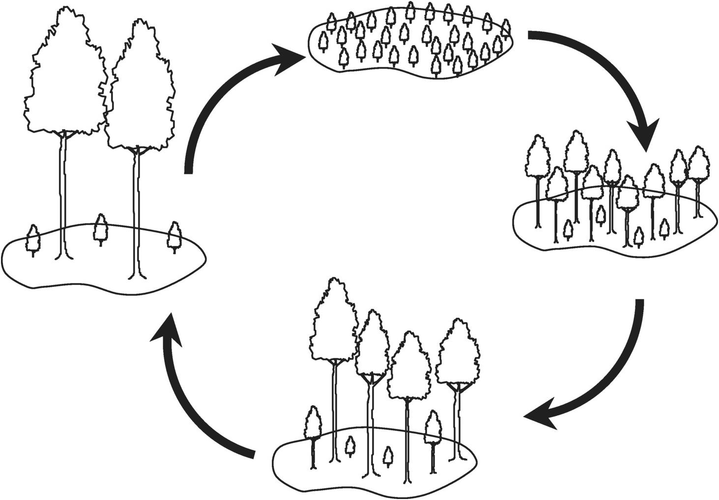 Vegetation Demography (Chapter 19).