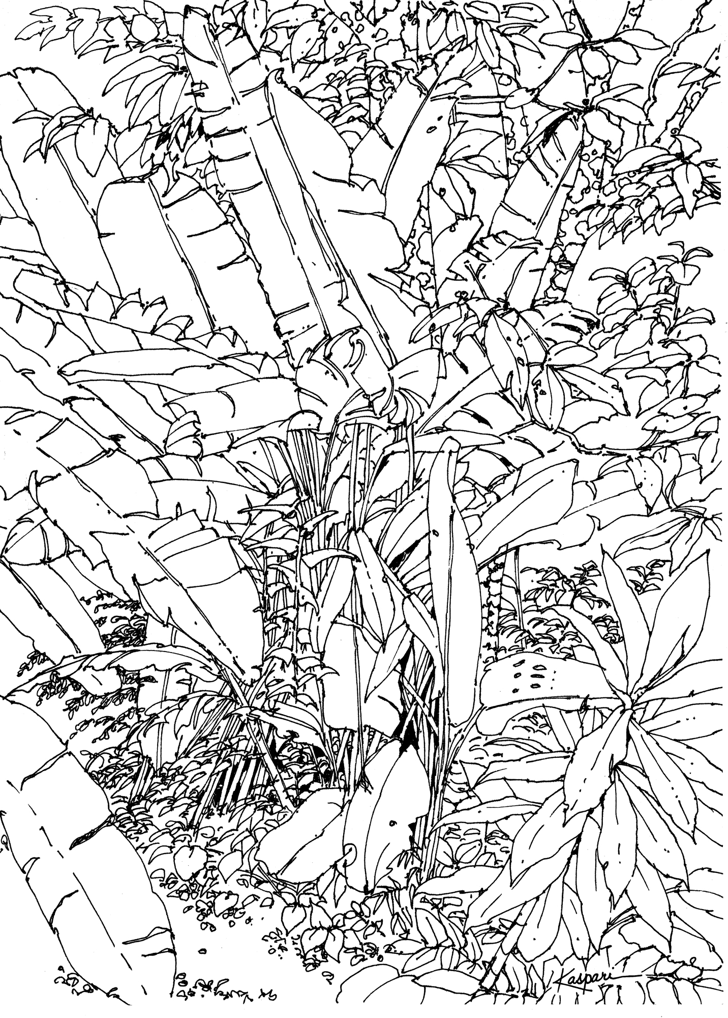 Forest Drawing Pictures at GetDrawings.com.