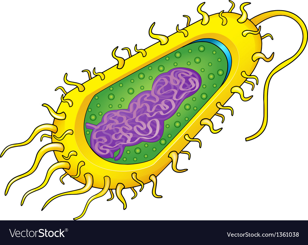 Bacteria cell.