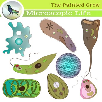 Microscopic Organisms Clip Art.