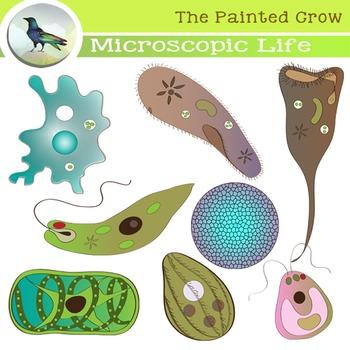 Microscopic Organisms Clip Art.
