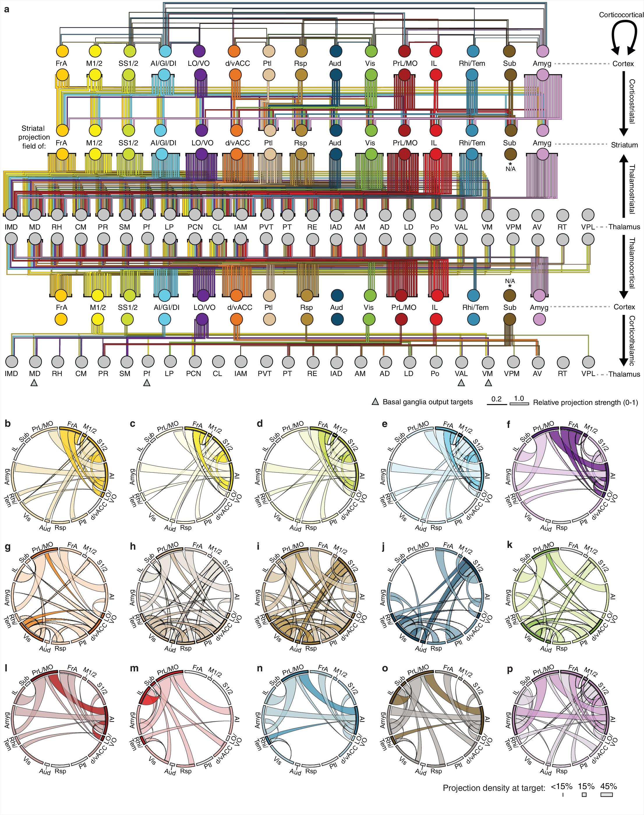 A comprehensive excitatory input map of the striatum reveals novel.