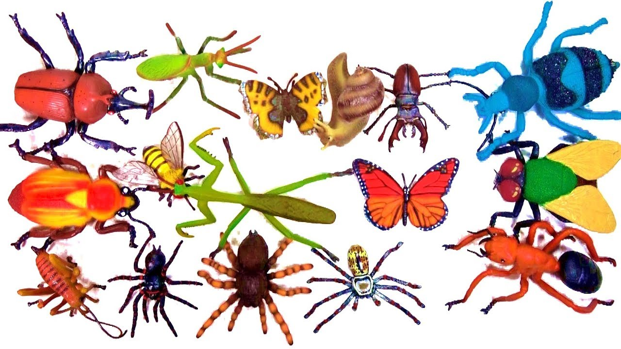 Insects And Spiders Clipart.