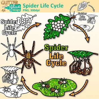 Spider Life Cycle Clip Art: Insect and Bug Graphics {Glitter Meets Glue}.