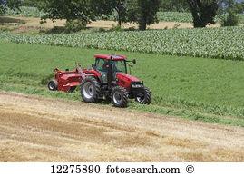 Alfalfa hay Stock Photo Images. 303 alfalfa hay royalty free.
