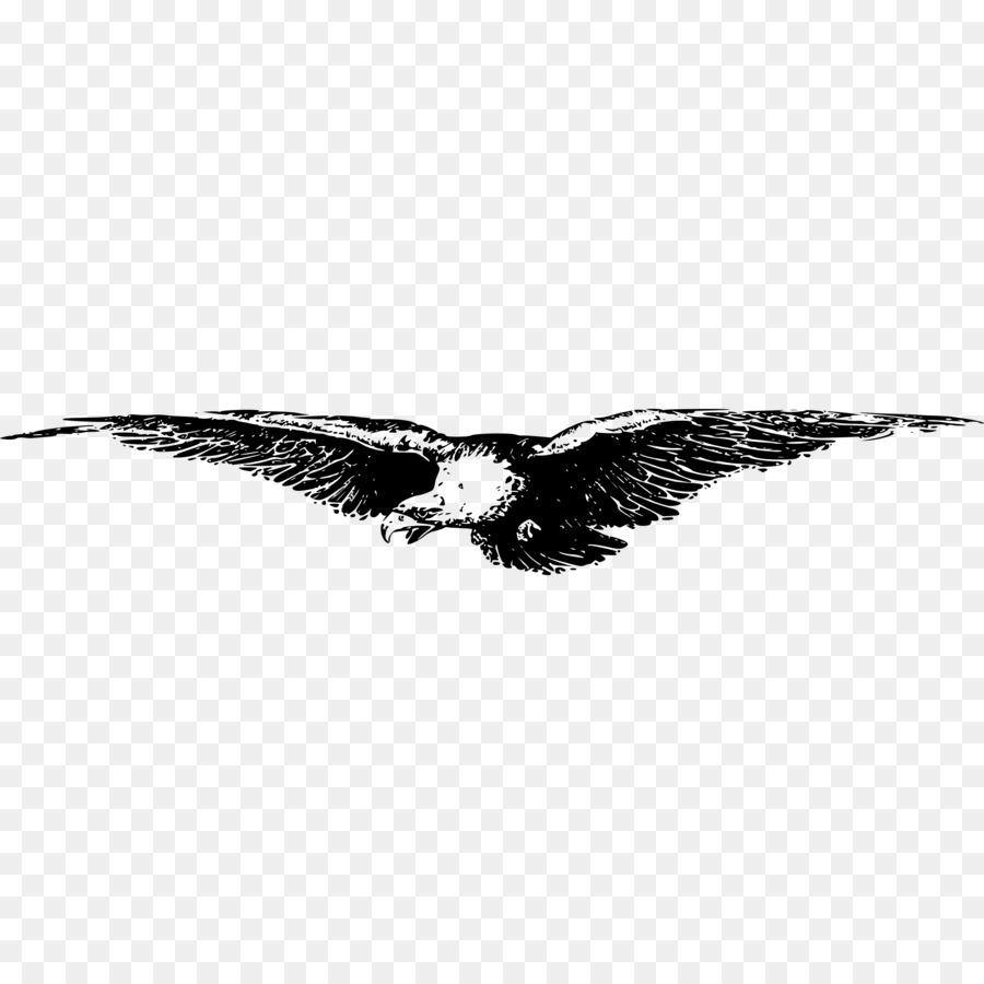 Eagle Bird clipart.