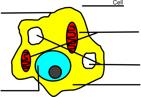 Animal Cell Unlabeled.