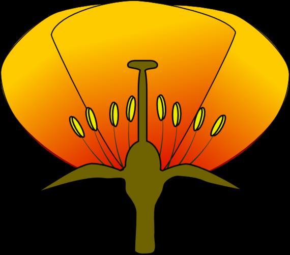 Brain Diagram Unlabeled Clipart.
