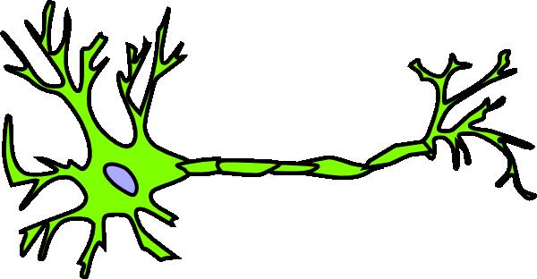 Unlabelled Neuron.