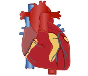 Heart Diagram Clipart.