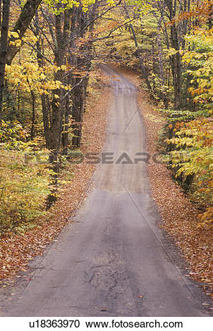 Stock Photography of An unpaved road through the woods, Sandwich.