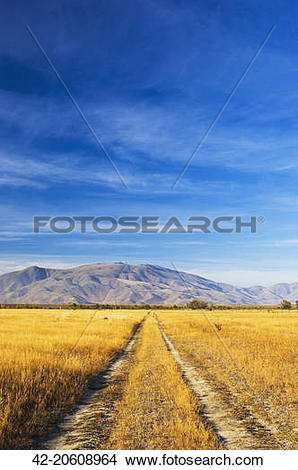 Stock Photo of Unpaved Road in Meadow 42.