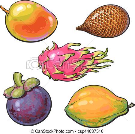 Vector Clip Art of Whole unpeeled, uncut mango, papaya, mangosteen.