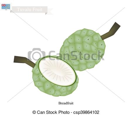 Vector Clipart of Unripe Screw Pine, A Native Fruit in Tuvalu.