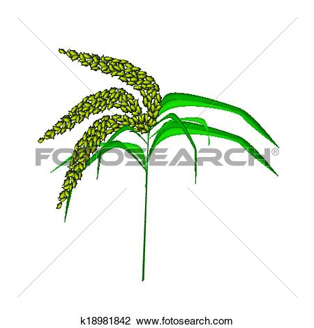 Clipart of Green Colors of Unripe Millet on White Background.