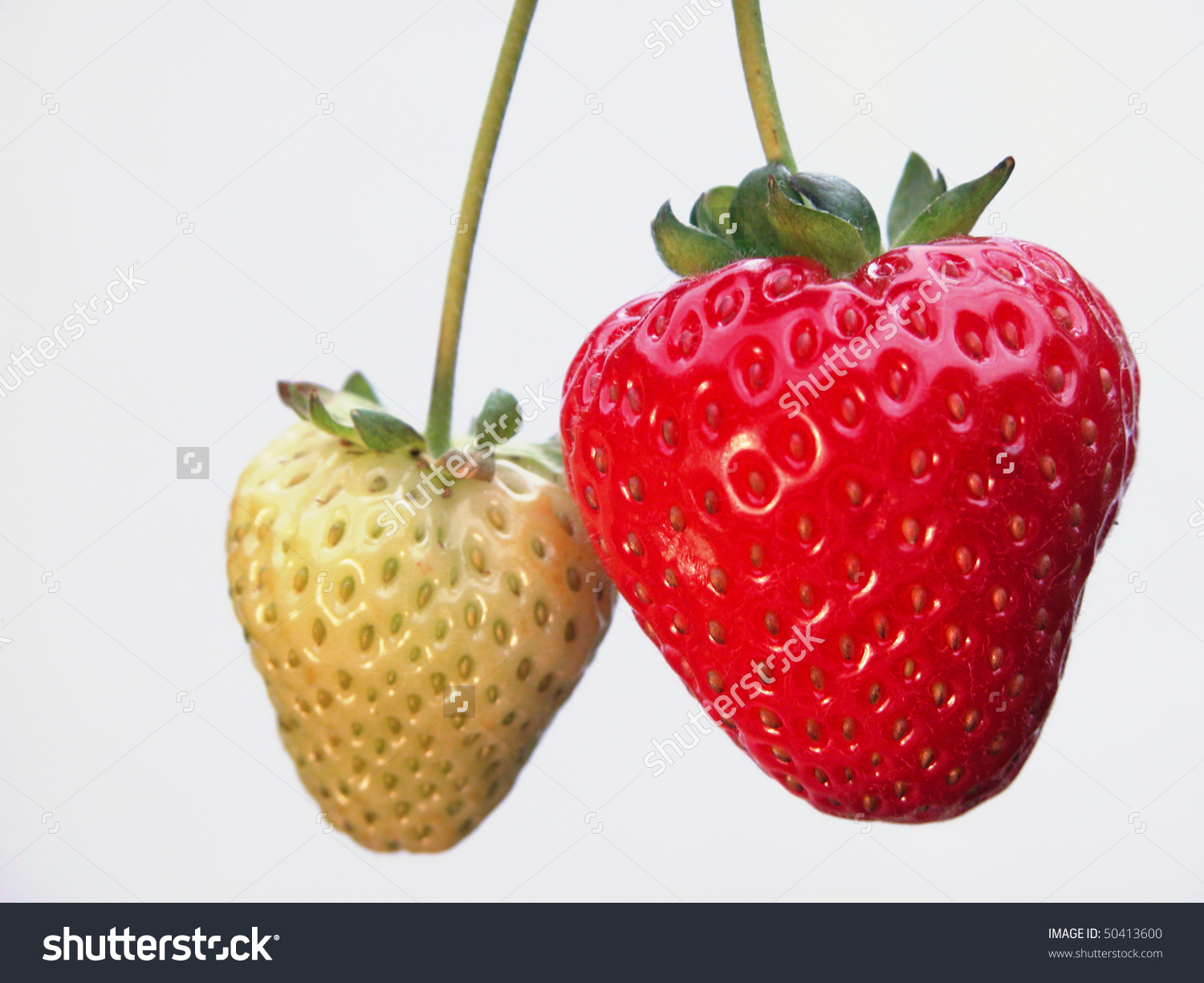 Ripe Unripe Strawberry Stock Photo 50413600.