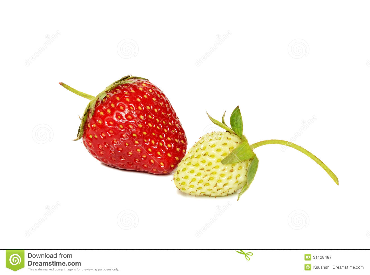 Ripe And Unripe Strawberries Stock Photo.
