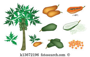 Unripe Clipart Vector Graphics. 241 unripe EPS clip art vector and.